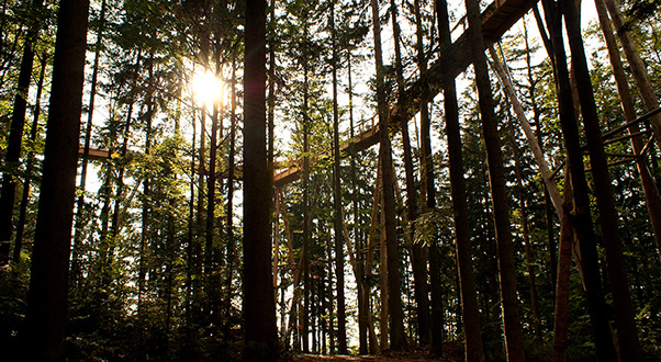 passeggiata-sugli-alberi-germania