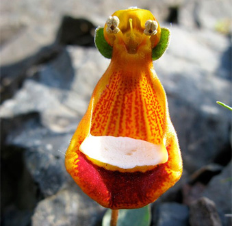 i-fiori-più-strani-e-curiosi-del-mondo-Alieno