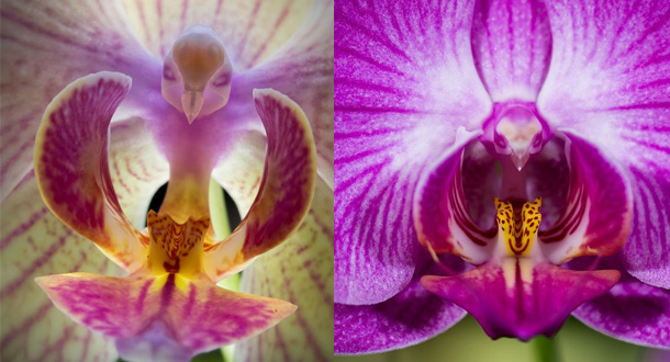 I fiori pi strani e curiosi del mondo for Fiori immagini e nomi