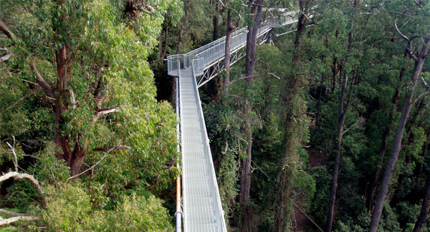Illawarra-Fly-Tree-Top-Walk