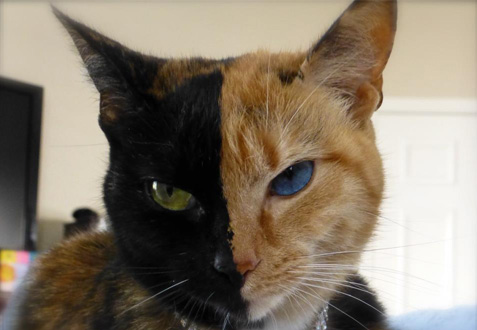 il-gatto-a-due-teste