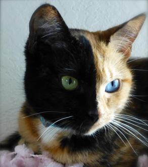 venus-il-gatto-più-famoso-del-mondo