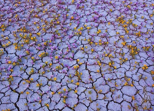 fiori-altopiano-del-colorado