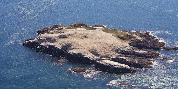 isola-grassholm