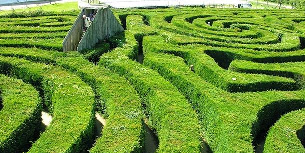 longleat-hedge-maze-labirinto